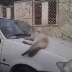 Zombiecat in Italy